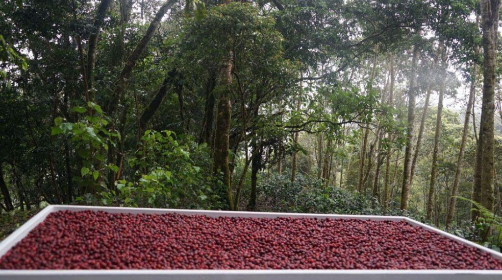 Najdrahšia káva na svete: Ninety Plus Coffee
