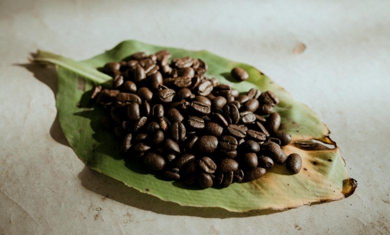 bio organická káva Cafézia - pohľad na zrná najvyššej kvality
