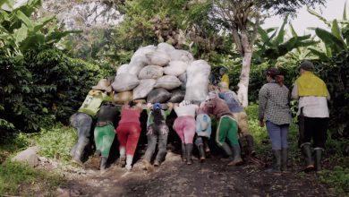 Photo of Podpora chudobných pestovateľov kávy: Prepitné cez aplikáciu