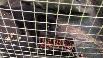 Photo of Cibetková káva: Produkt utrpenia a týrania zvierat