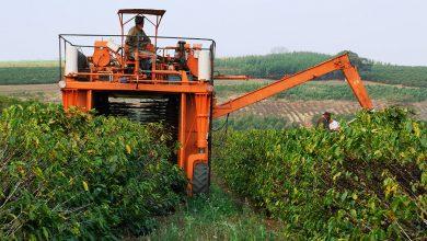 Photo of Video: Takýmito mega-strojmi Brazília likviduje tradičných pestovateľov kávy