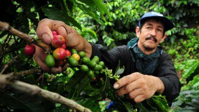 Photo of Farmári sú na kolenách, môže ich pozdvihnúť fair trade?