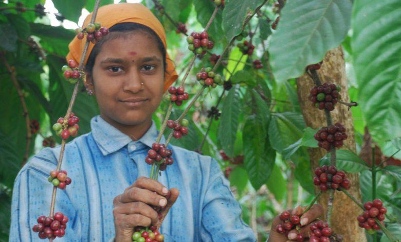 Problémy s pestovaním kávy v Indii