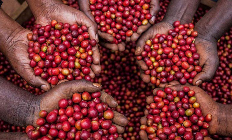 Pestovanie kávy a problémy farmárov