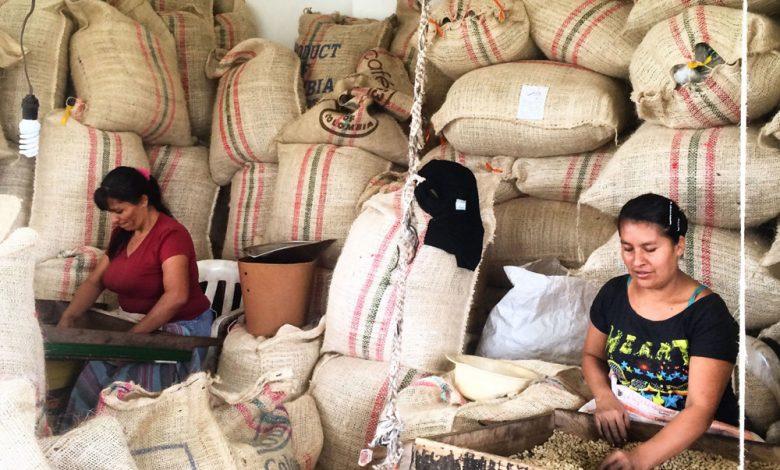 Kolumbijské pestovateľky spracúvajú kávu