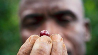 Photo of Koľko fairtradovej kávy sa predá na Slovensku? Nízke percento vás (asi) zaskočí…