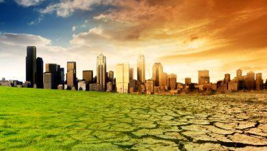 Photo of BOK č. 2: Pálenice nemajú čo páliť, globálne otepľovanie škodí aj káve