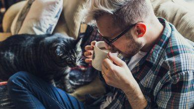 Photo of BOK č. 1: Počuli ste už o projekte mačacích kaviarní?