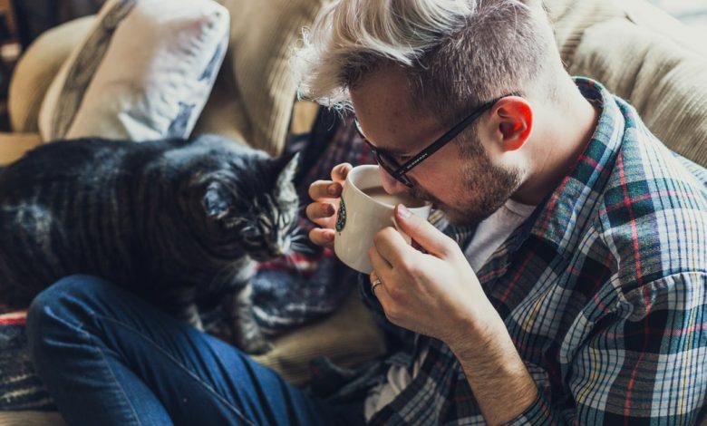 Mačacia kaviareň, mačacie kaviarne