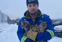 Photo of Kanaďan kávou zachránil primrznuté vyhodené mačiatka (VIDEO)