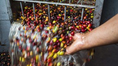 Photo of Kolumbia vytvorila fond, ktorý ochráni pestovateľov