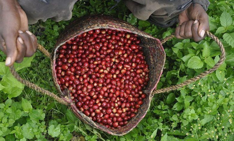 Bio organická káva
