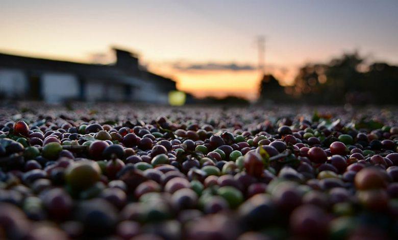 Fairtrade káva, detská práca