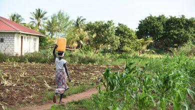 Photo of Keňa zvýši produkciu výberovej kávy, dostala peniaze od Svetovej banky
