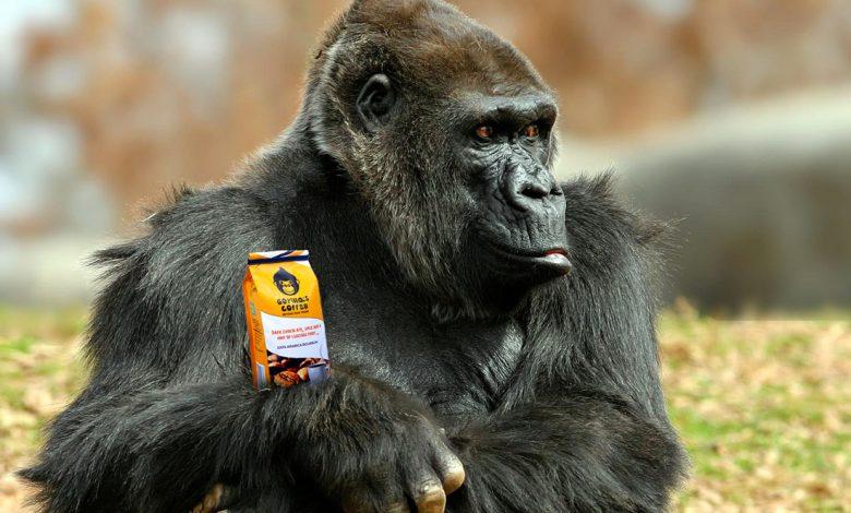 Gorilla's Coffee, Rwanda