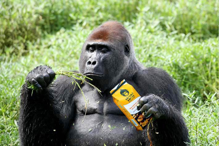 Gorilla's Coffee a trefná produktová fotka