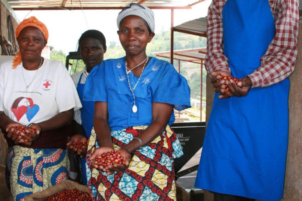 Pestovanie kávy v Rwande