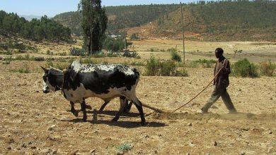 Photo of Africkým pestovateľom hrozia problémy, do zavlažovania musia investovať miliardy