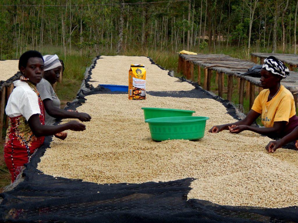 spracovanie kávy v Rwande