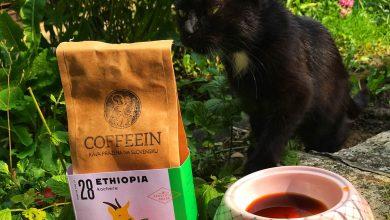 Photo of Chcú mačky kávu zahrabať? Naše testy to nepotvrdili… (VIDEO)
