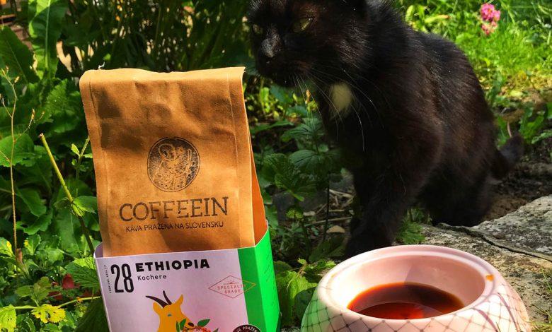 Mačka a káva Coffeein
