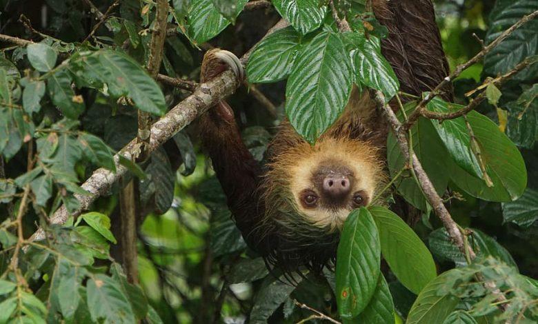 Kostarika a problém so zberom kávy