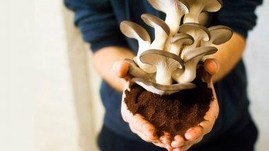 Photo of Pestovanie húb na kávovom odpade? Pekný príklad cirkulárnej ekonomiky