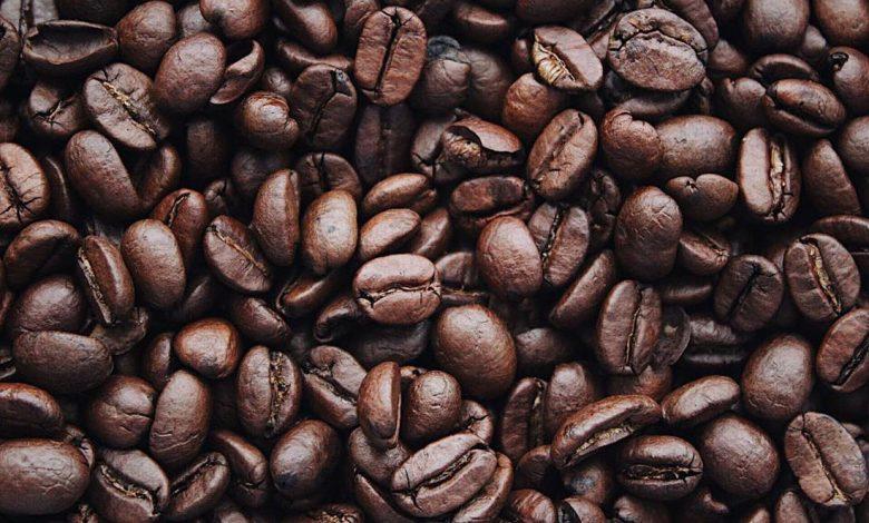 pestovanie kávy v Keni