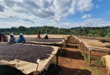 Photo of V Etiópii otvoria prvú vysokú školu kávy