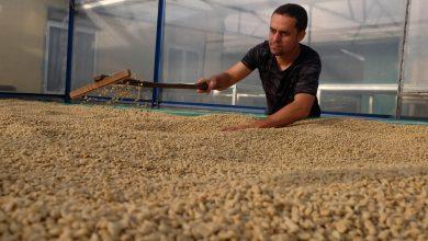 Photo of Slovák riadi vietnamskú kávovú farmu: Čím všetkým si preskákal a z čoho šedivie?