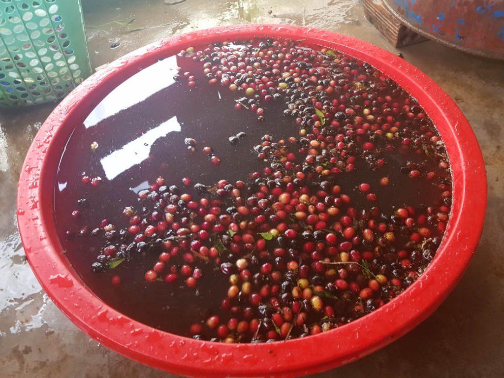 floating kávových čerešní