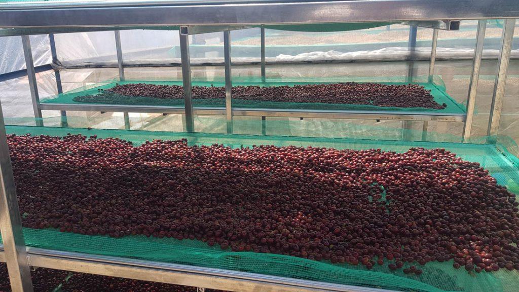 africké postele a kávové zrná