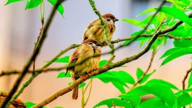 Photo of Bird Friendly káva ako snaha o záchranu vtáčej populácie