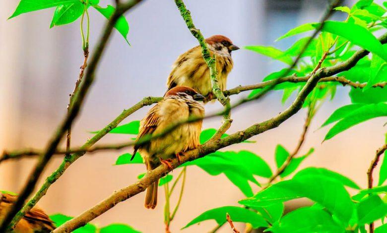 Bird Friendly káva