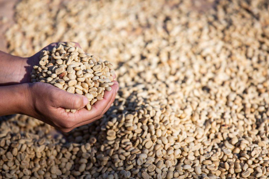 výberová káva z Brazílie