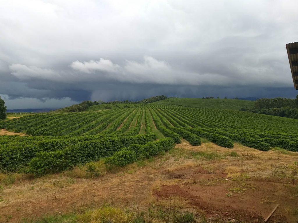 pestovanie kávy v Brazílii