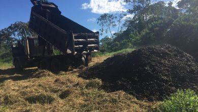 Photo of Môže kávová dužina pomôcť s obnovou lesov?