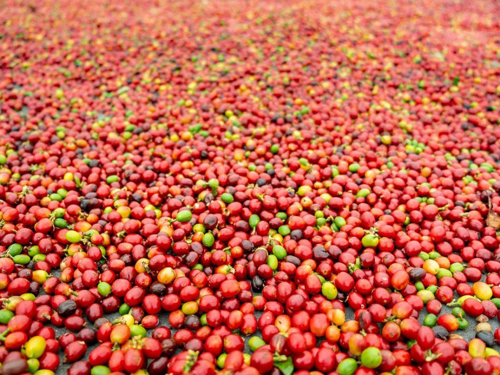 naturálne spracovaná káva, sušenie kávových čerešní