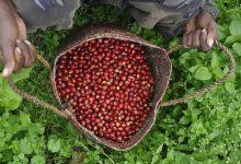 Photo of Single origin káva: Ako ju vieme presne definovať?
