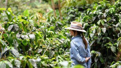 Photo of Direct trade káva: Radosti a úskalia boja o exkluzívne zrno